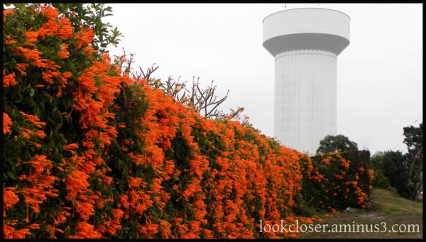 blooming vines flowers water tower