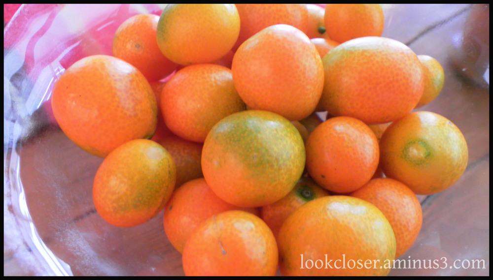 kumquat orange fruit spheroids