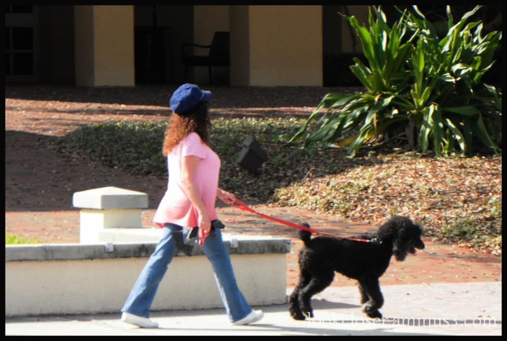 pink woman dog walking