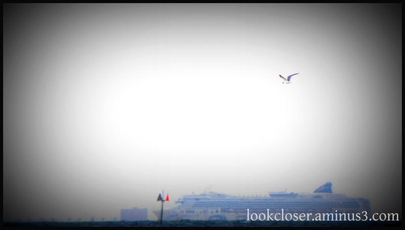 cruise ship seagull