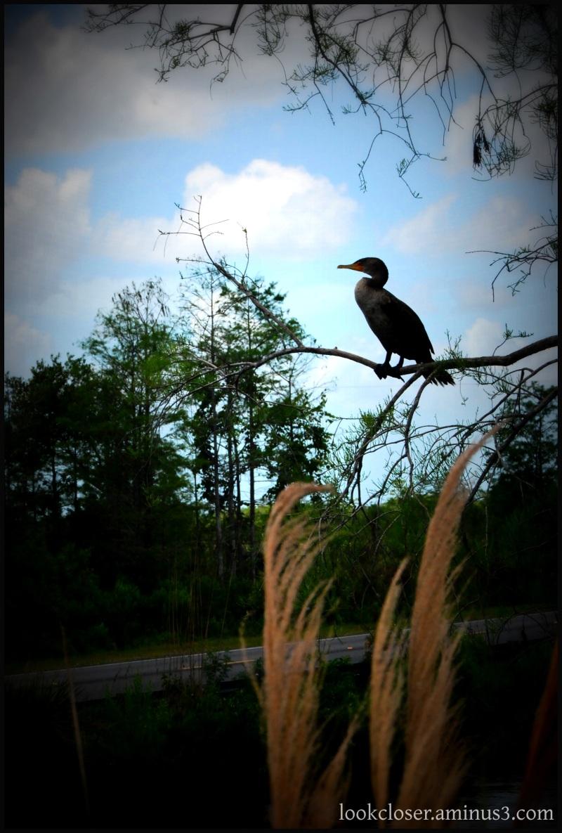 everglades lomo bird tree blue sky