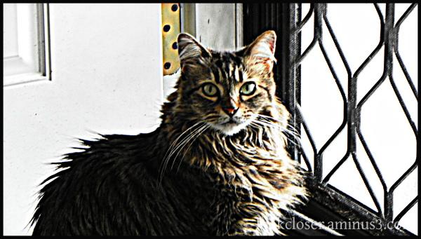 stella cat hdr