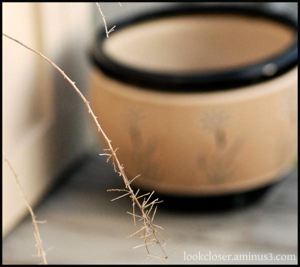 pot branch brown black fl