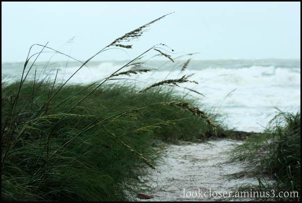 anna maria fl tropical storm dune path