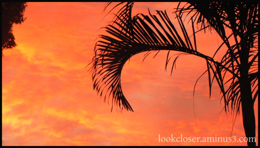 dawn red sky bradenton fl home