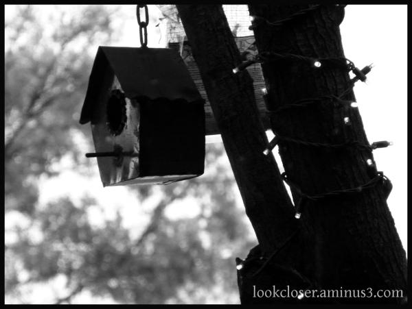 bw birdhouse