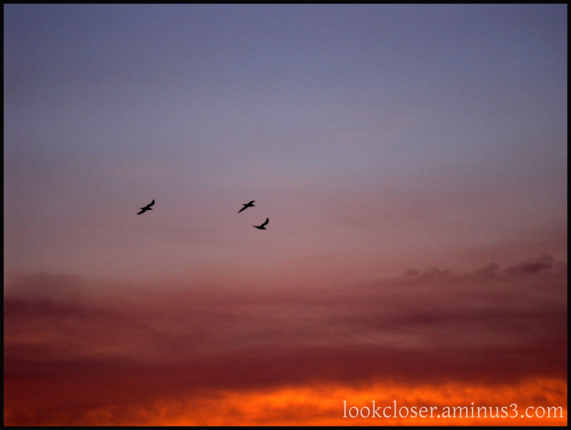 sea birds sunset red FL Gulf