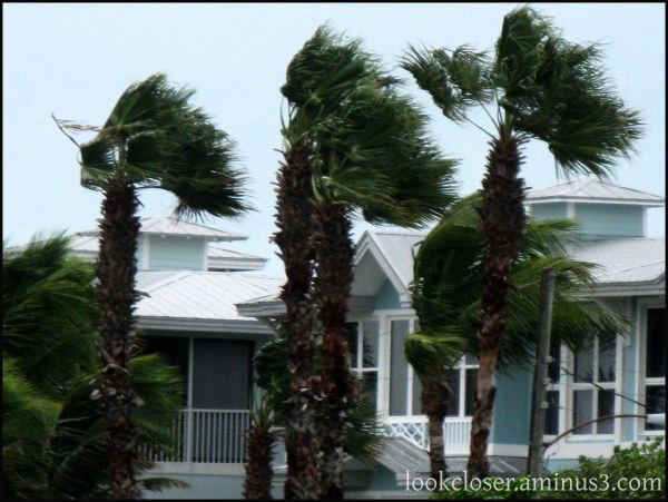 storm wind palms FL
