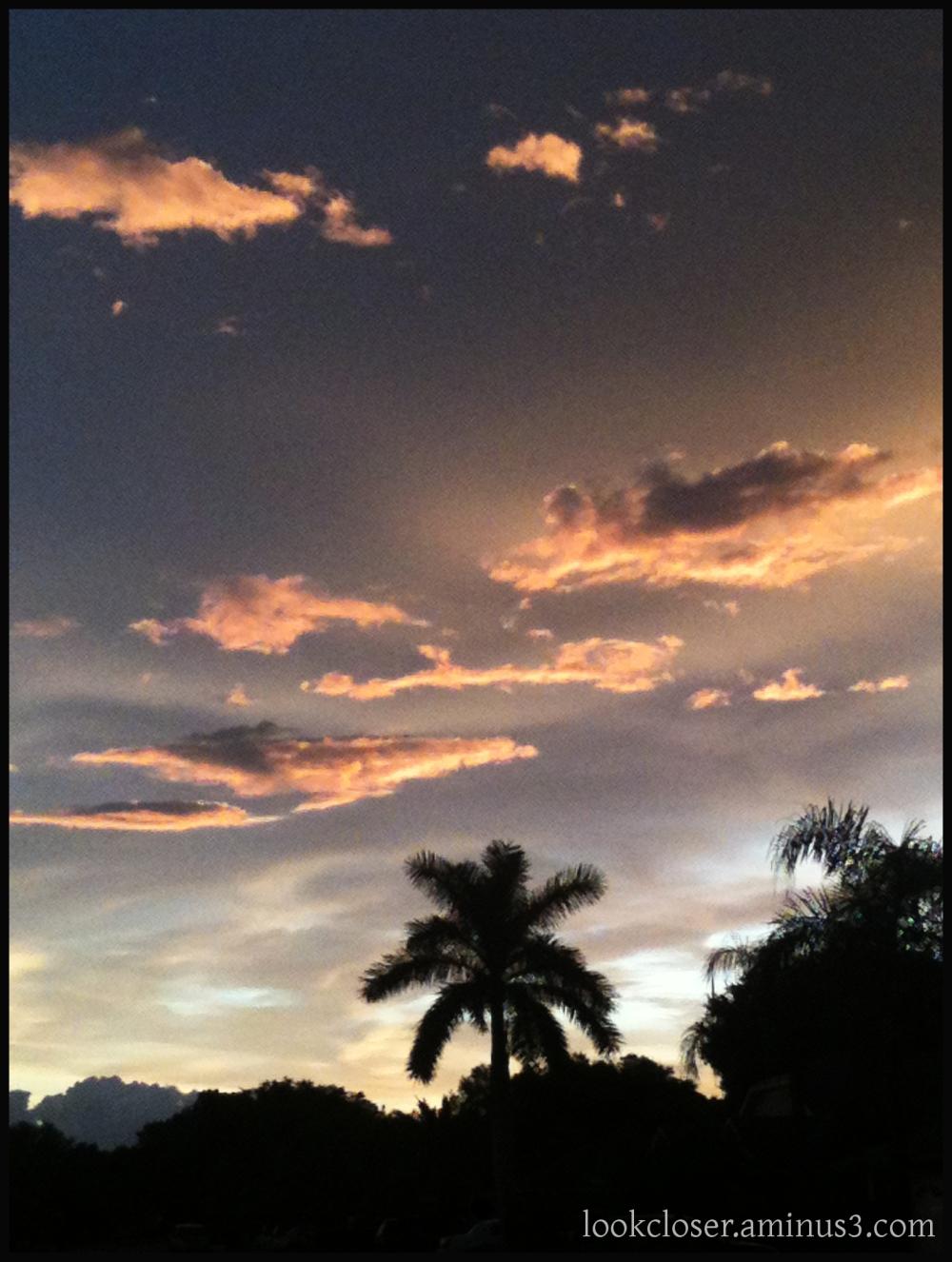 sunset palm silhouette Bradenton iphone