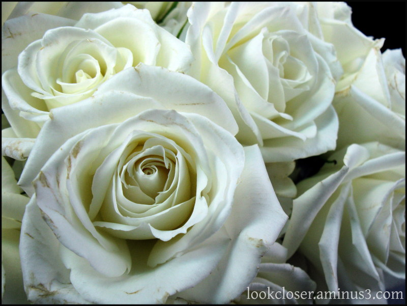 white roses bridal bouquet Laurie Wedding