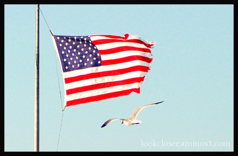 flag patriotism red white blue