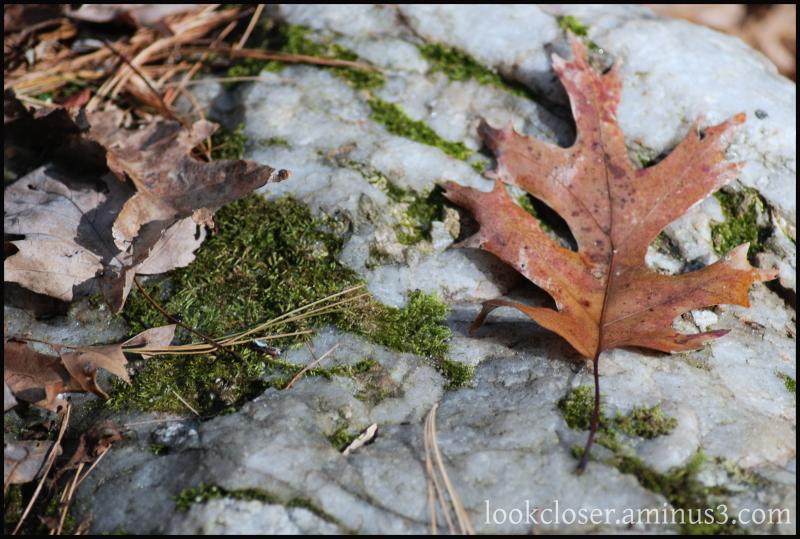 autumn leaf green moss rock