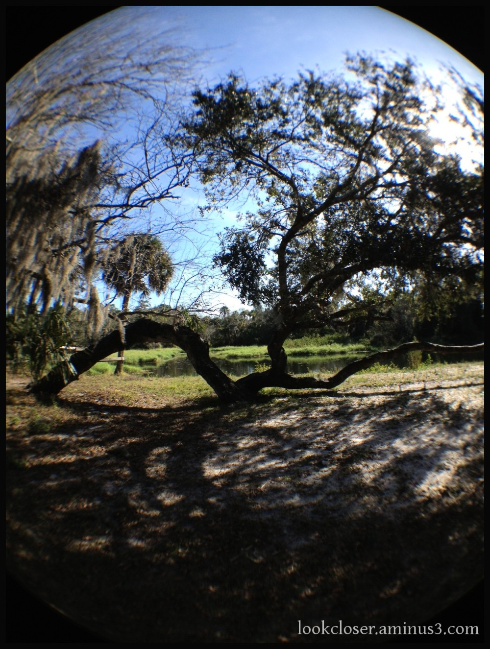live oak myakka river fisheye
