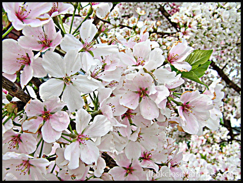 springtime blossoms georgia hdr archives