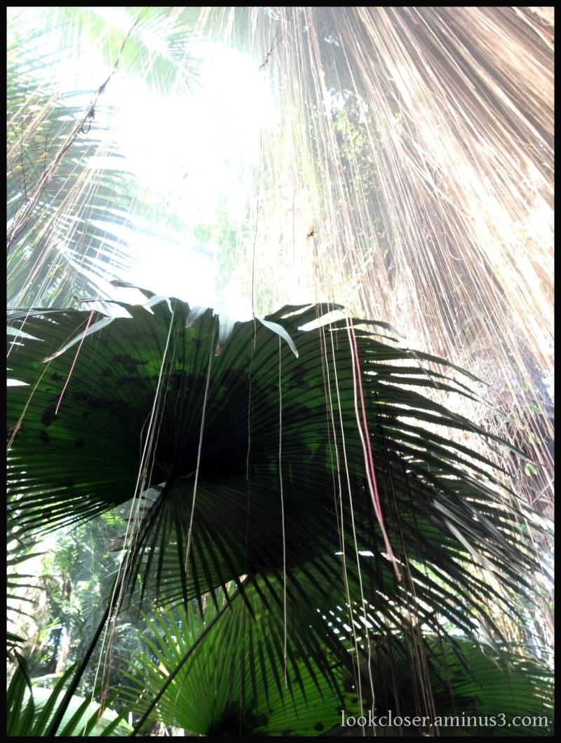 sunshine green palm garden Atlanta