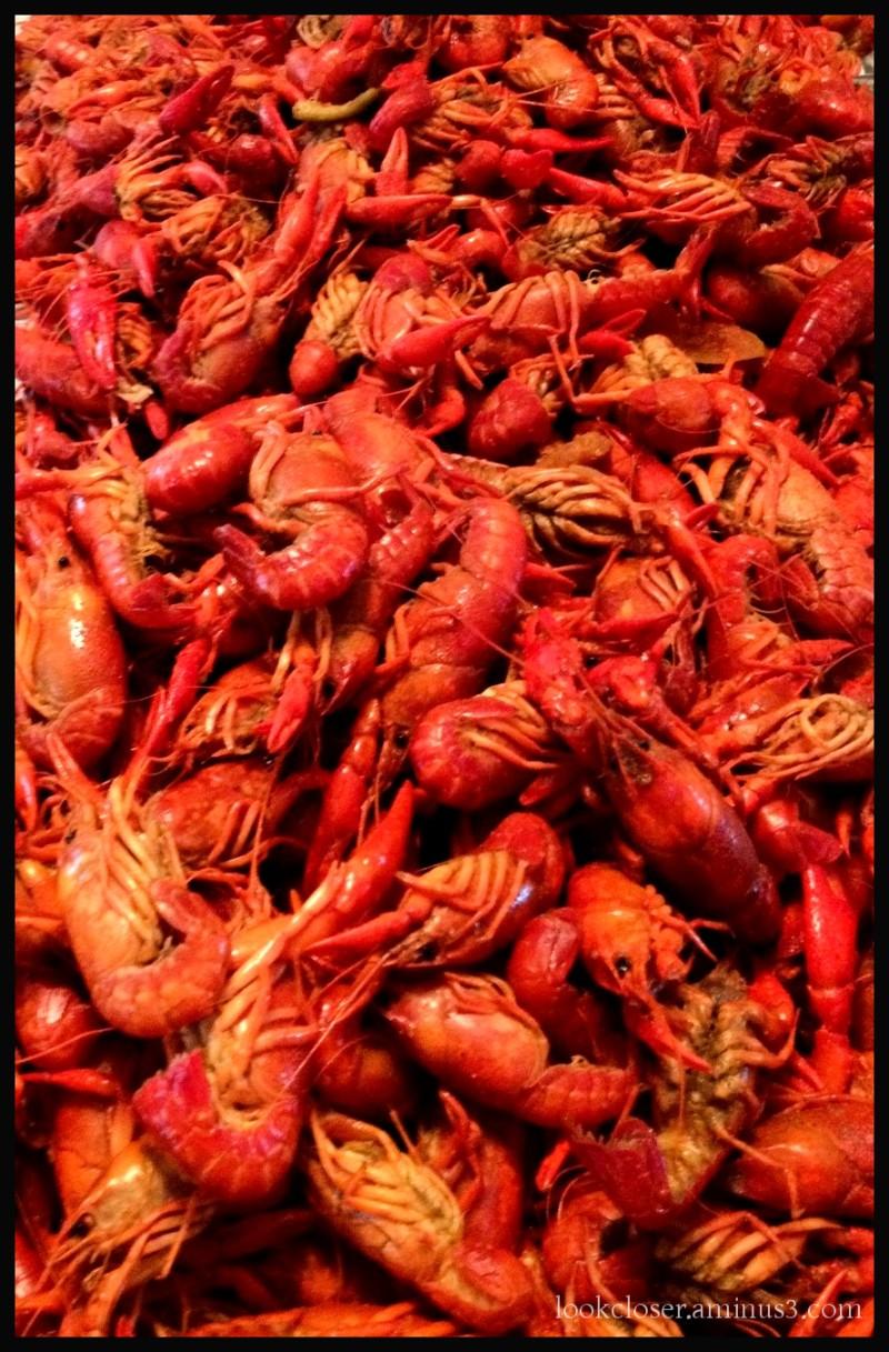 boiled crawfish Louisiana cuisine