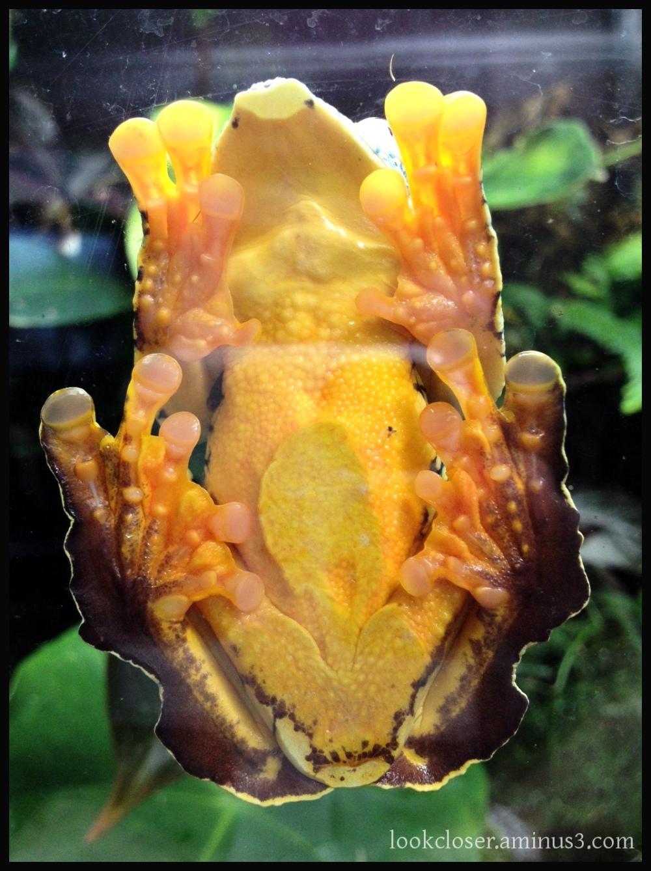frog glass