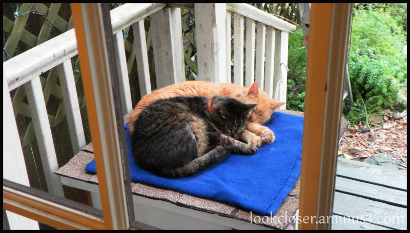 two sleeping cats apalachicola fl
