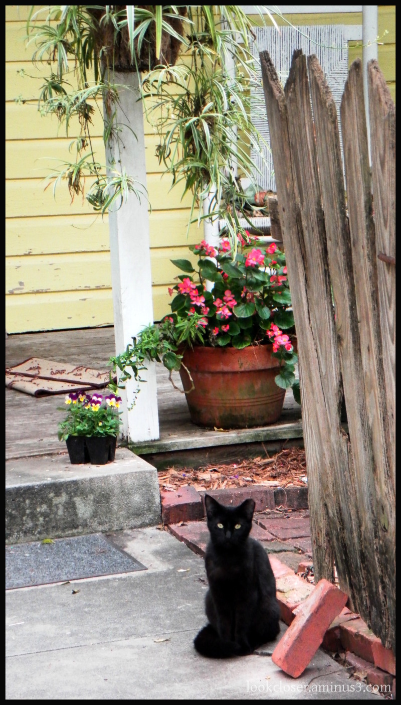 one cat cottage apalachicola fl