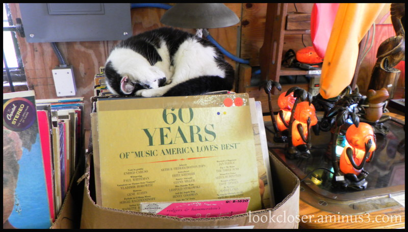sleeping cat antiques apalachicola fl