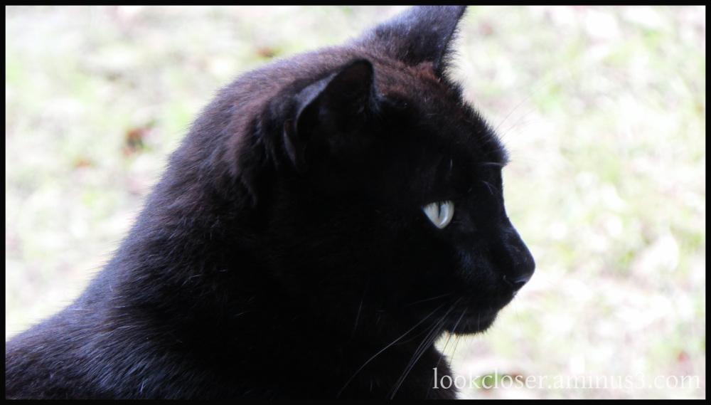 black cat concierge gibsoninn apalachicola fl