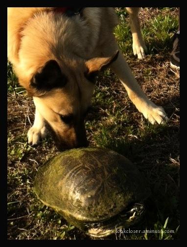 Dini turtle encounter