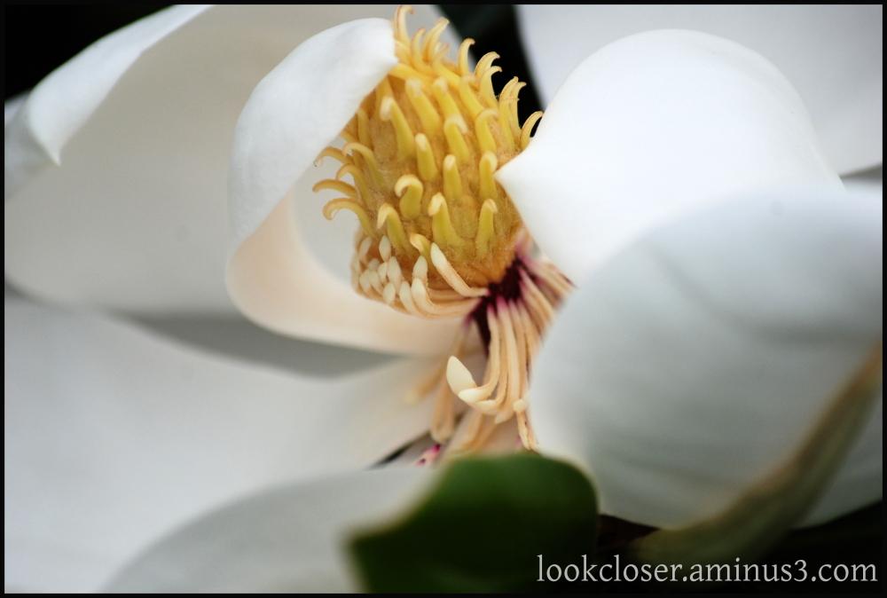 magnolia blossom home inside