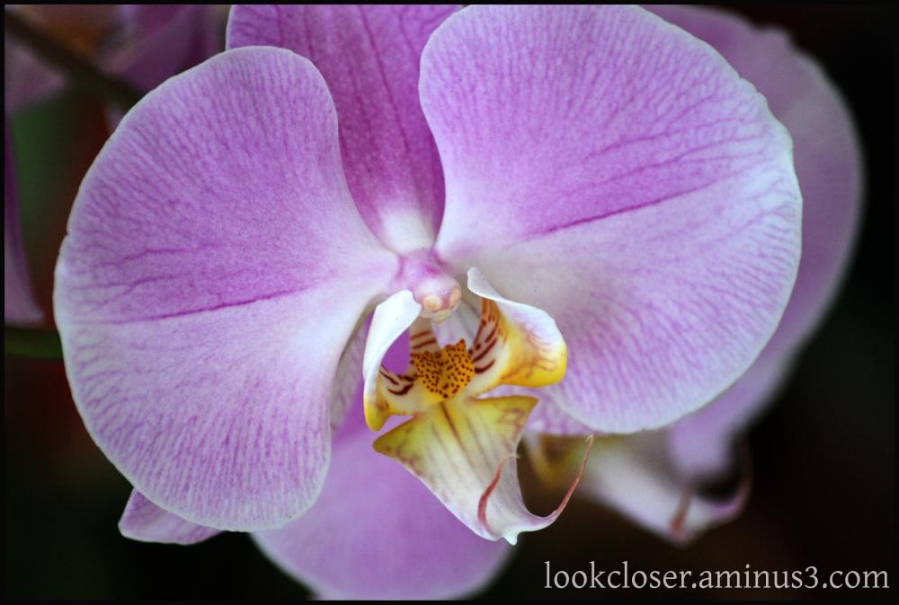 garden plants orchid flower home