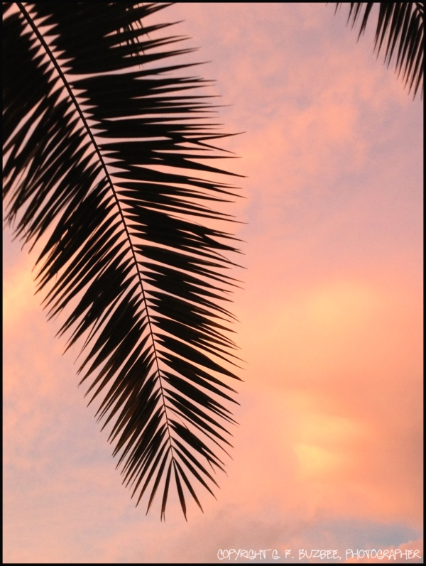 skyscape pink sunset florida palms
