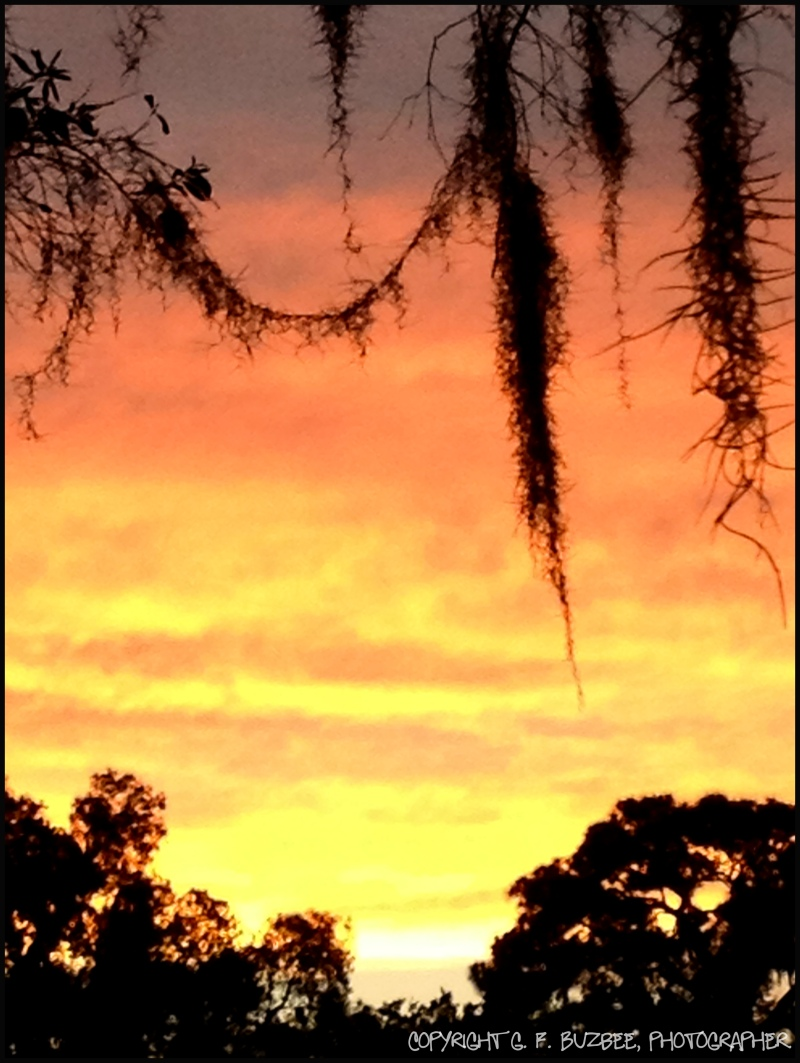 sunset silhouette Florida