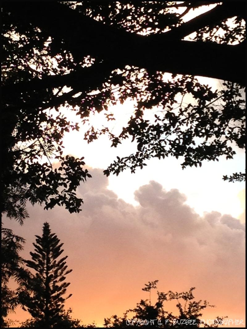 florida sunset sky clouds tree