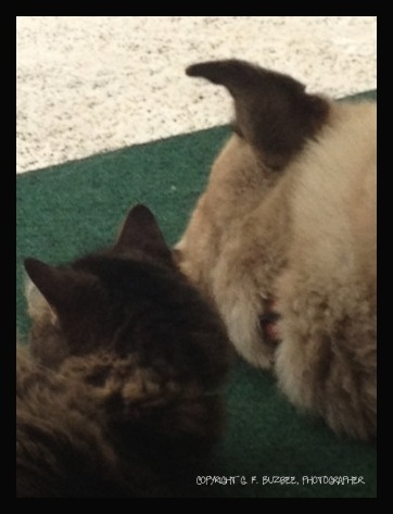 dini stella dog cat resting siesta amigos