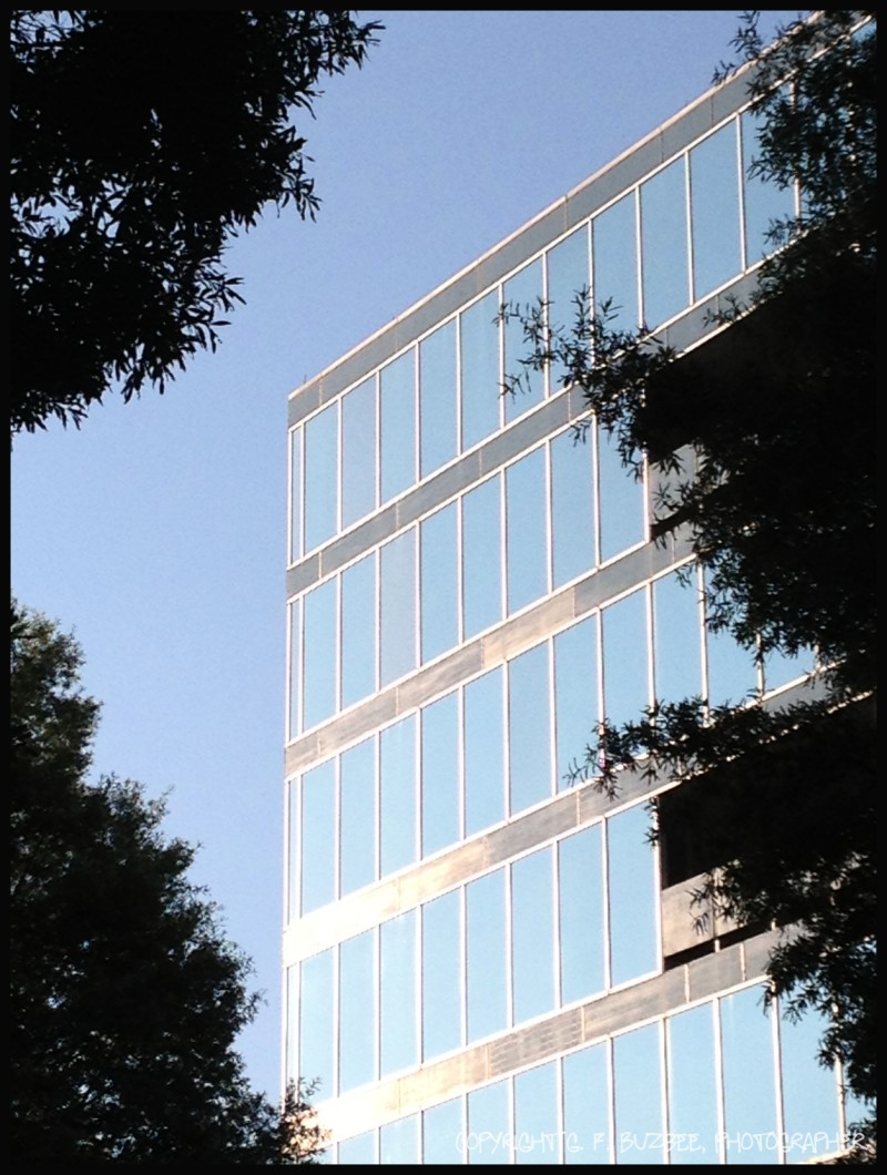 sky glass building trees