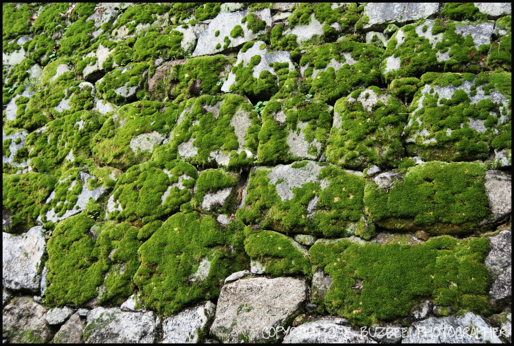 Kyoto Japan temple stone wall moss