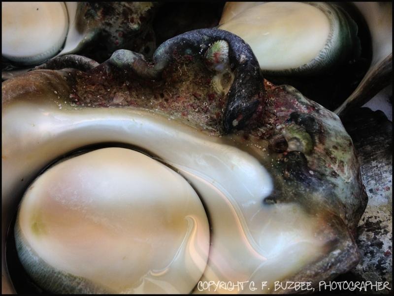 Okinawa Japan fish market abalone