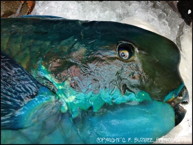 Naha Okinawa Japan fish market parrotfish