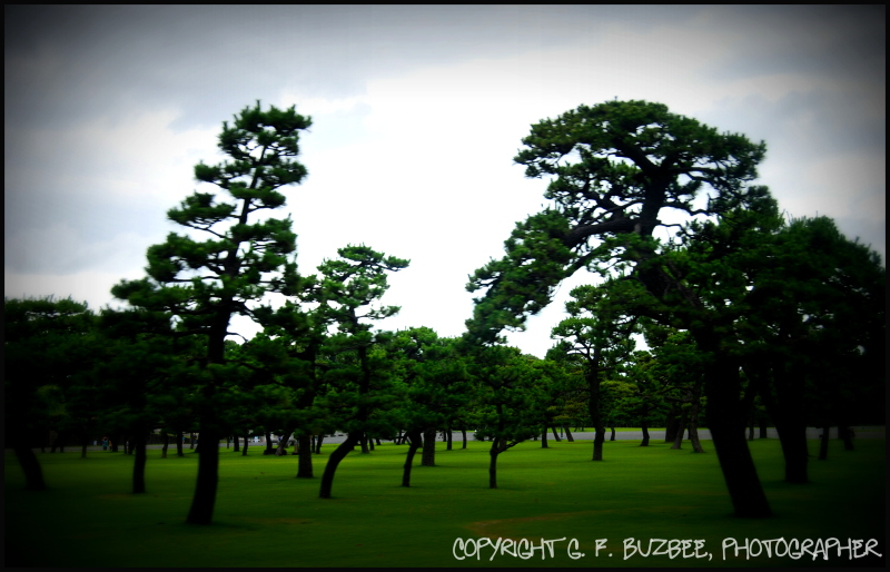 pines lomo green paths Tokyo