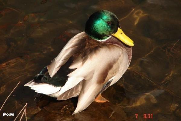 Quack, quack