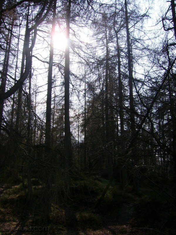 Sunshine through the trees at High Dam