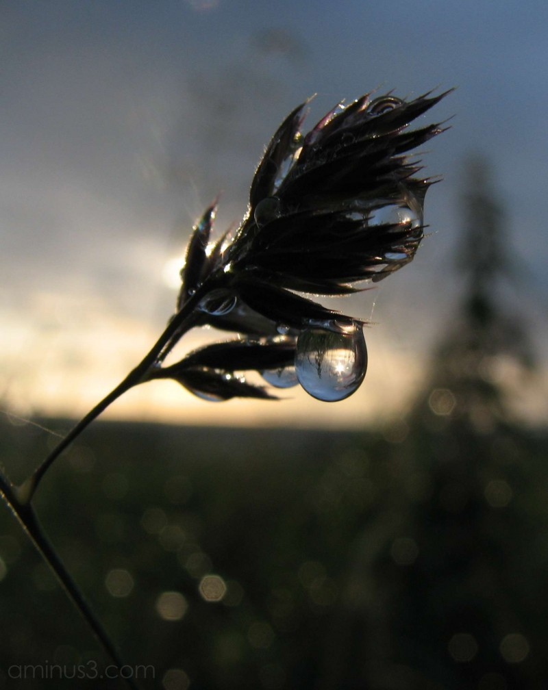 Raindrop catching the last of the sunlight