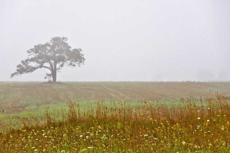 Tree and Fog II