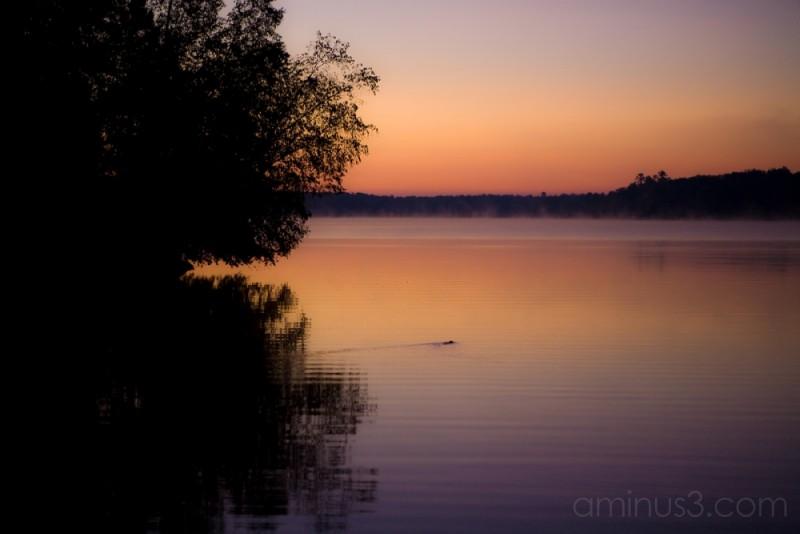 Beaver Morning Swim