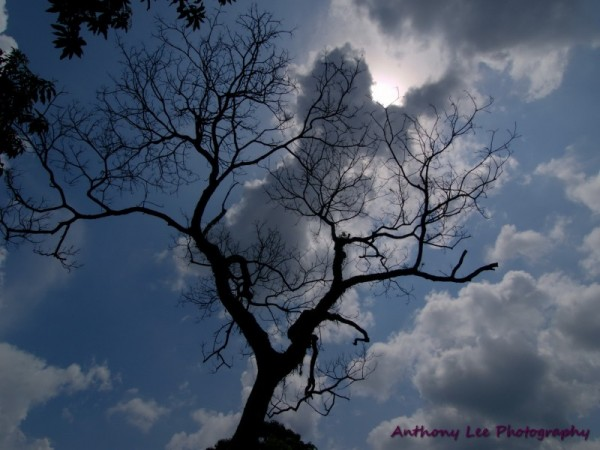 Bare tree against clouds