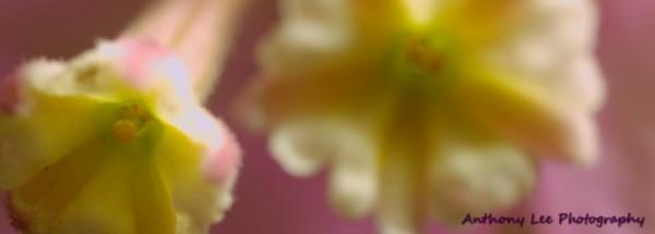 Flowers in flower