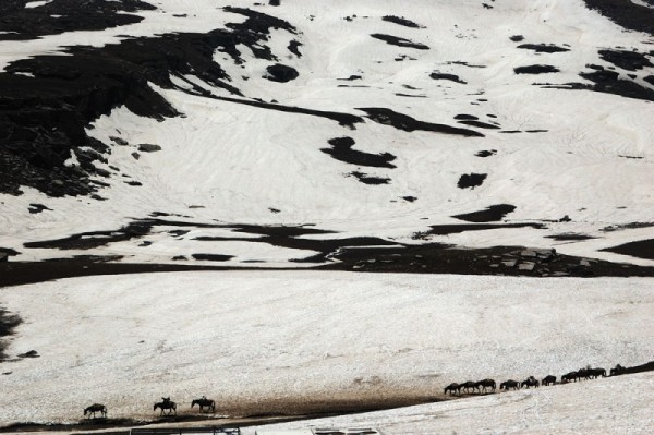 Mules crossing the Rohtang La