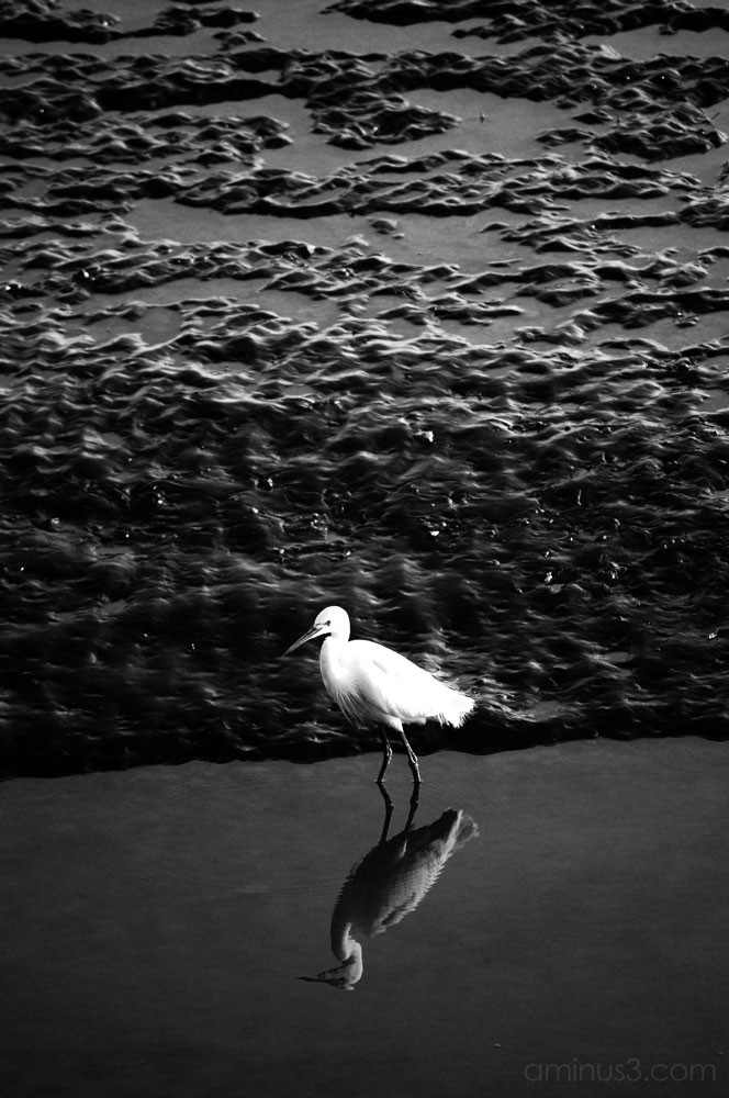 Another egret?