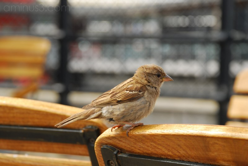 A bird perching on a chair