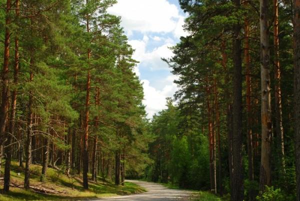 A normal countryside road in Estonia