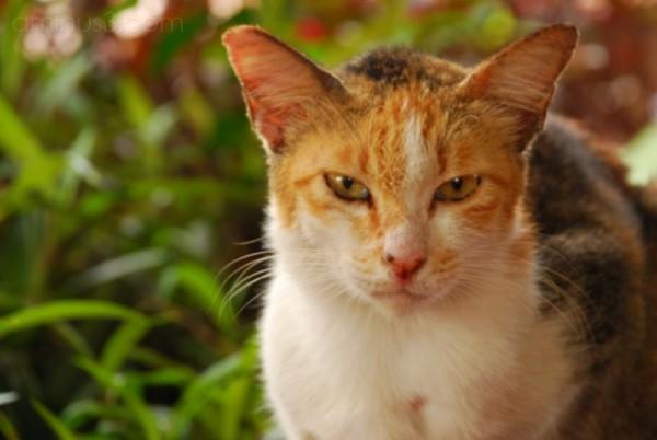 A cat looking menacing