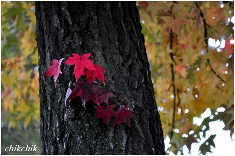 Secret of fall!